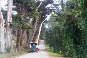 Tree trimming on Montara, CA country road