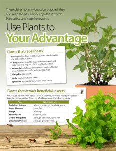 plants that repel pests