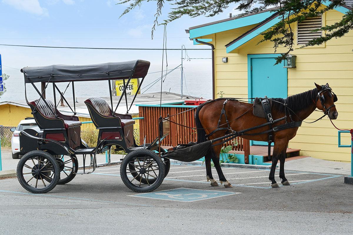 Horse in Montara