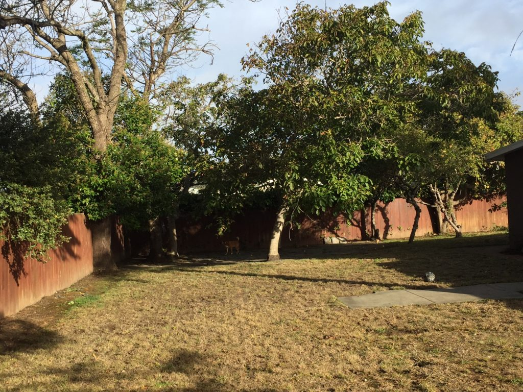 Lower El Granada double lot yard with fruit trees